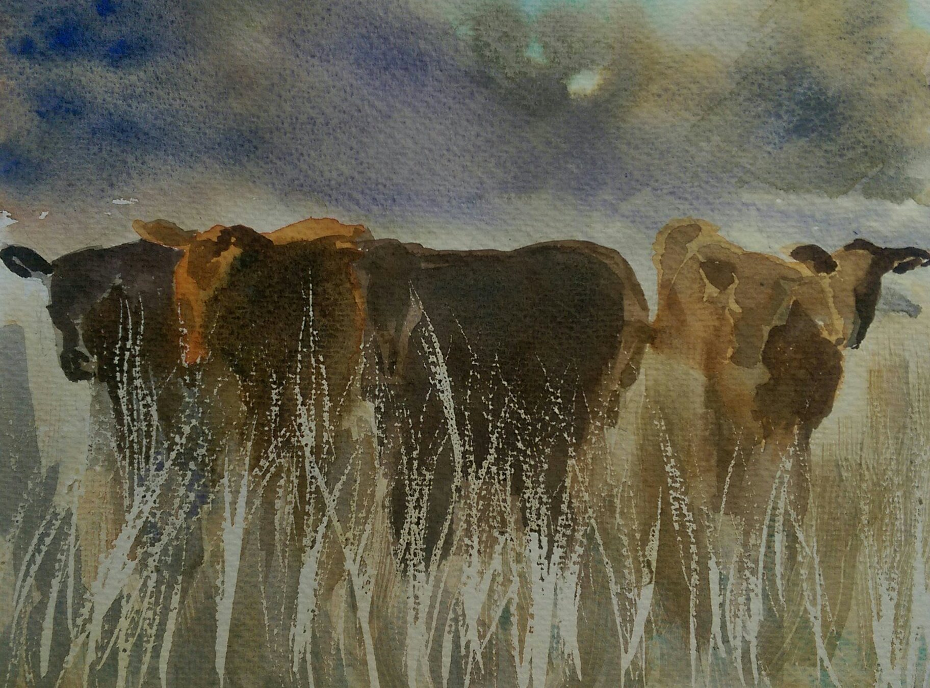 Young beef cattle - watercolour by Joe Norris